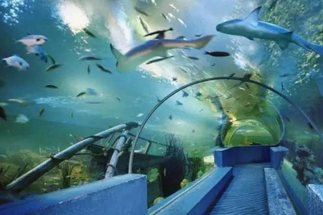 国家海洋博物馆:台风来袭 13日14日预约可延期