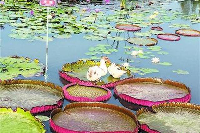 公园提升改造项目完成 水上美景喜迎八方游客