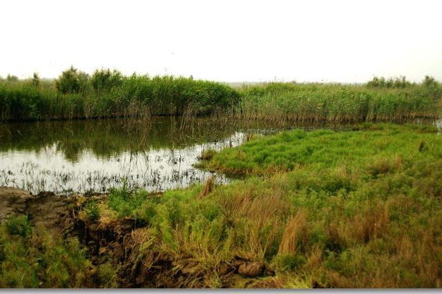 大港汉沽湿地选划自然保护地