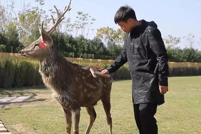 观鹿何必去奈良!在天津马上就能和小鹿近距离互动啦