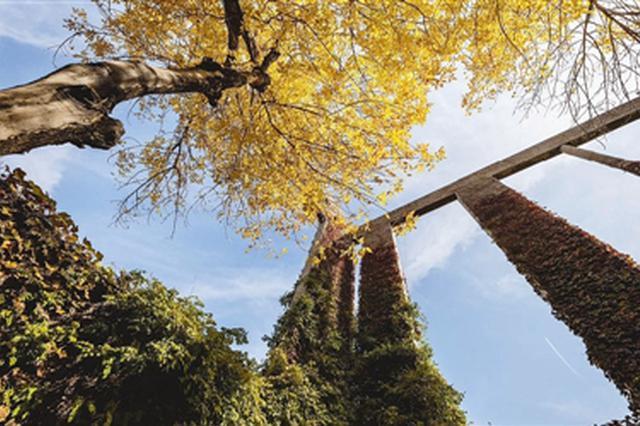 强冷空气之前 津城可暂享温暖秋阳