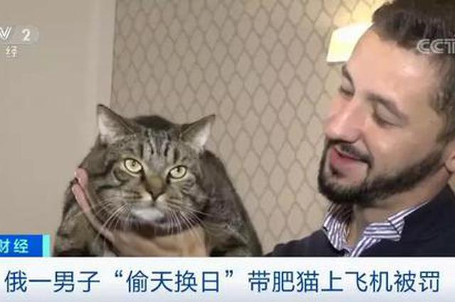 男子偷将瘦猫换胖猫带上飞机被罚!猫:这锅我不背