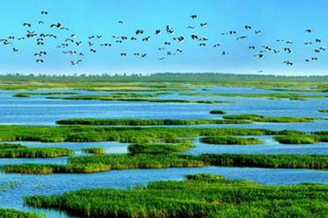 天津将构建亲海旅游空间 400公顷滨海湿地修复