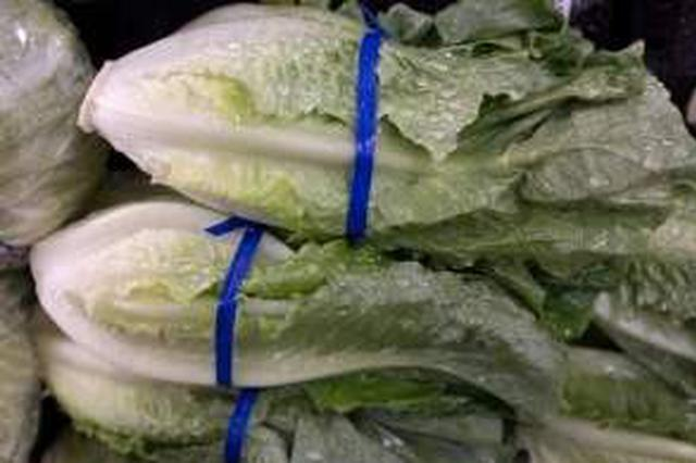 每天都有新鲜蔬菜运往市区