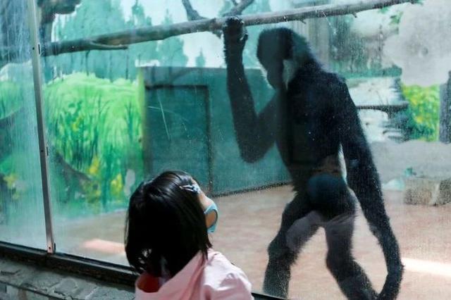 天津动物园恢复开园第一天 猴:终于见到人了