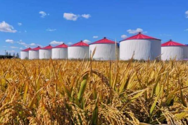 农业农村部:四组数据告诉你有没有必要囤粮