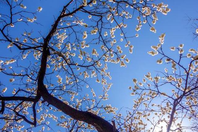 春暖 花开!没有一个春天不会到来