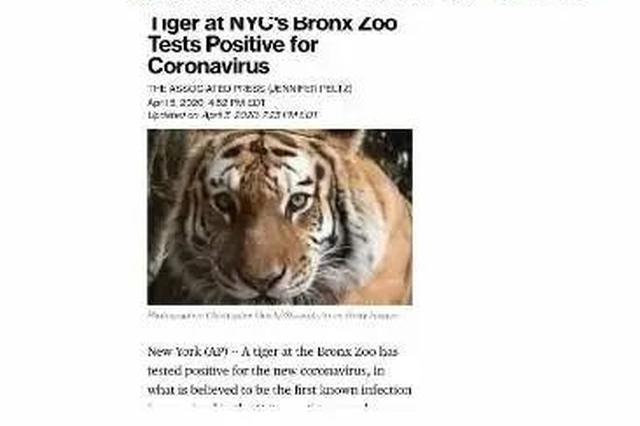 全球首例!4岁老虎感染新冠病毒