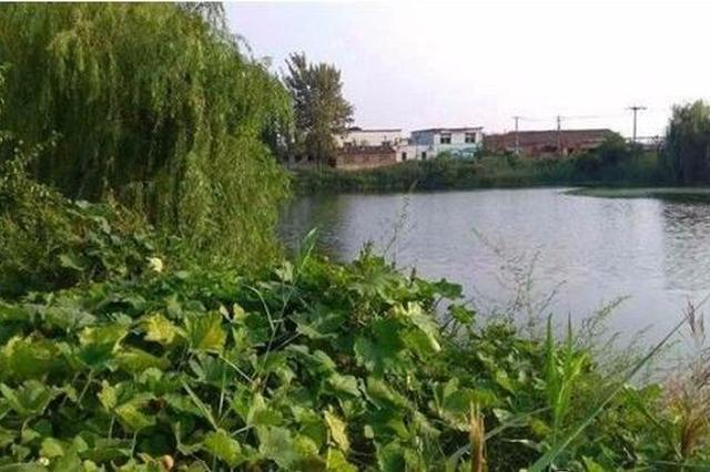 """武清区黄花店镇解口村:""""小村庄""""焕发""""大能量"""""""