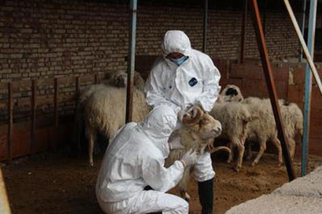 """动物防疫法修订草案突出""""六强化"""""""