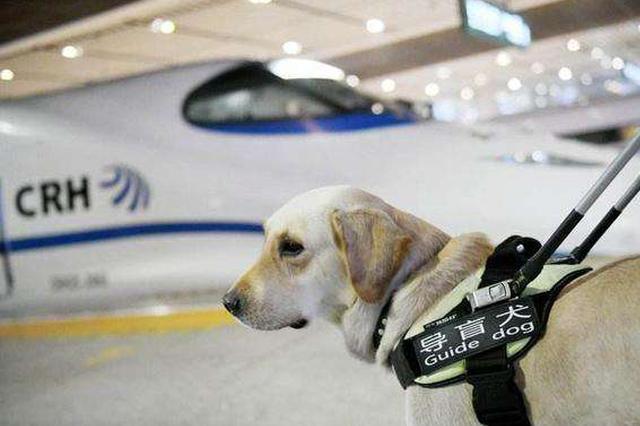 带导盲犬坐公交被拒 有误会也有认知误区