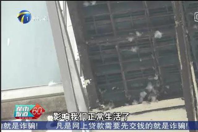 居民区能养鸽子吗?官方回应来了!