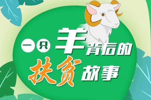 【津云读图】天津食品集团董事长张勇 讲述一只羊背后的扶贫故