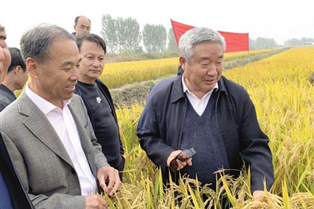 """北方超级粳稻在我市选育成功 """"津原89""""亩产达882.9公斤"""