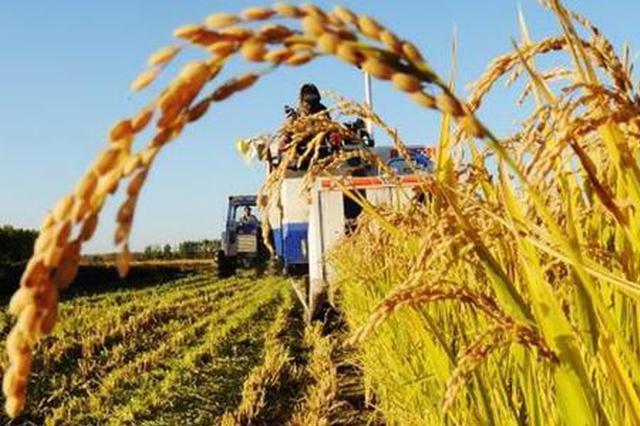 天津今年粮食总产预计超228万吨 连续三年达200万吨以上