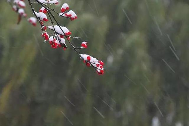 小雪抵津 阴冷十足
