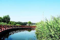 永定河湿地公园津城新景