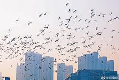 海河岸边欣赏海鸥