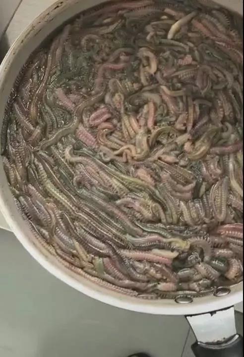 天津部分群众在一盆盆的吃这个东西……吓坏众网友