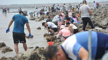 北京山东等地市民端午扎堆天津海滩狂挖海鲜