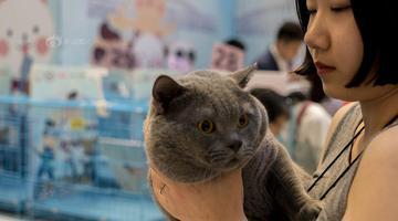 武汉一家商场举办纯种猫比赛