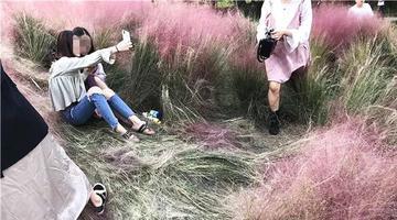 种3年的网红花海3天被毁