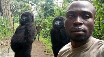 大猩猩和护林员自拍 站姿专业