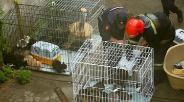 俄动物收容所起火300只猫被困