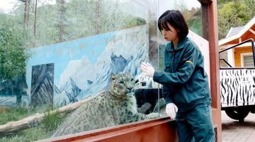 青藏高原90后雪豹女饲养员