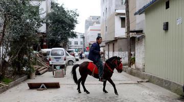 老人城中村里每天骑马遛狗半小时