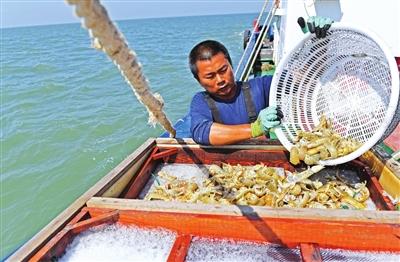 捕捞上来的海货