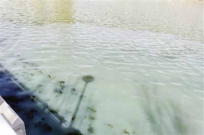海河光华桥附近水质浑浊 经调查为泵站维修时渗漏的沉淀物
