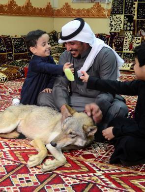 沙特男子家中宠物不一般