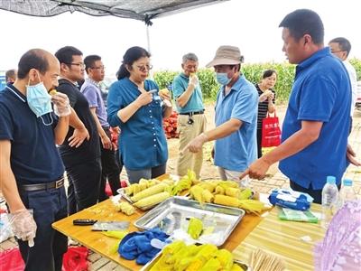 ▲相关专家调研鲜食玉米种植项目