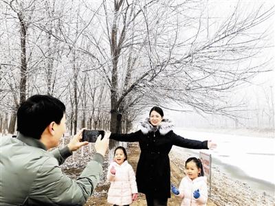 昨天,北辰郊野公园里漂亮的树挂成为冬季一景。