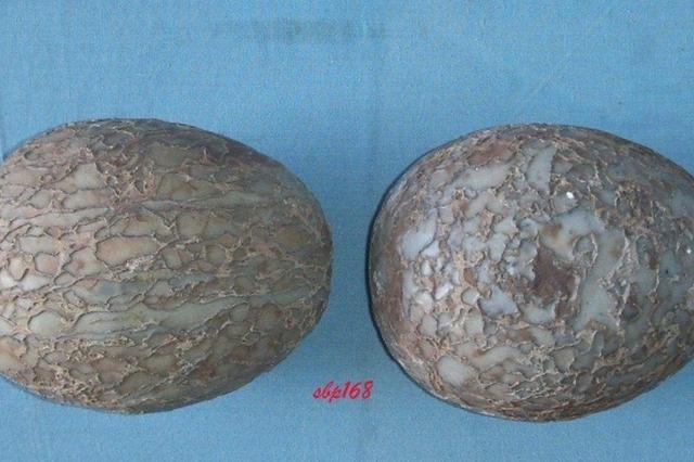 2名天津专家入选古生物化石专家库