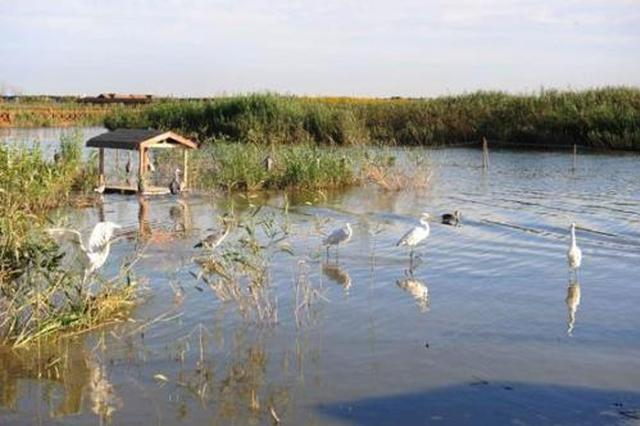 七里海生态移民项目正在报审 尚未出台正式文件