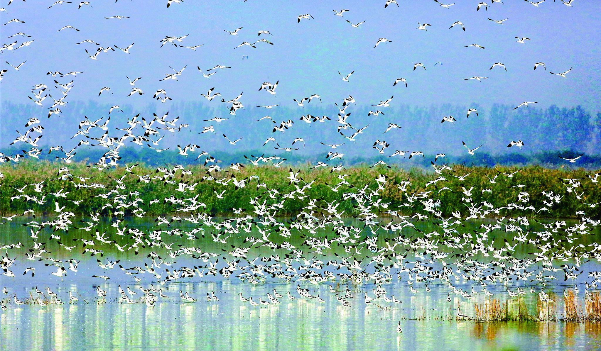 摄影作品:鸥群