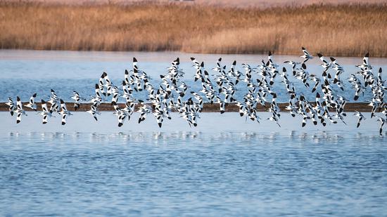 摄影作品:湿地的春天