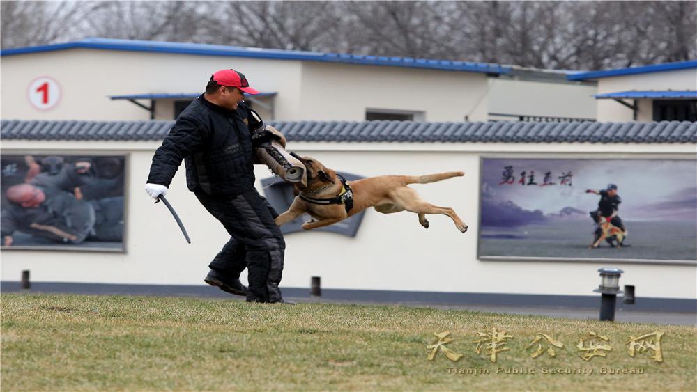天津特警的日常训练