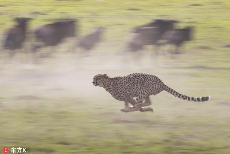 摄影师环游世界用镜头定格动物精彩瞬间