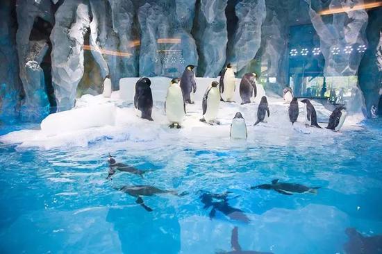 企鹅馆是全球展示企鹅数量最多的展区之一。憨态可掬,萌翻了。展馆里面太冷了,家长最好给孩子带件外套。