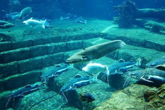 其实每个馆都有各种鱼,这里是海洋王国呢