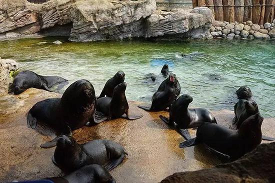 海狮港湾,大朋友小朋友可以20元买6条小鱼,喂食海狮(海洋王国的东西都很贵,大家最好到园区外消费)