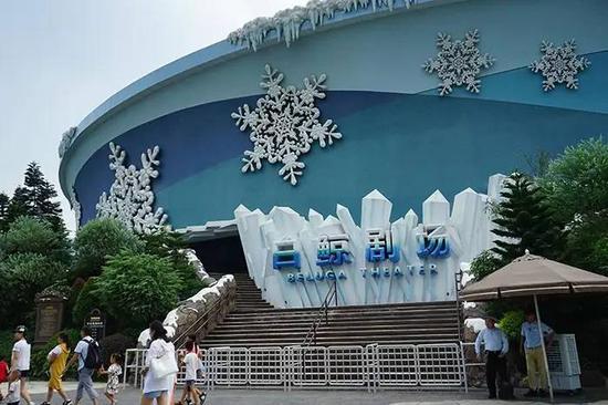白鲸剧场比在白鲸馆看到的白鲸要漂亮清楚,不要错过白鲸表演哟!