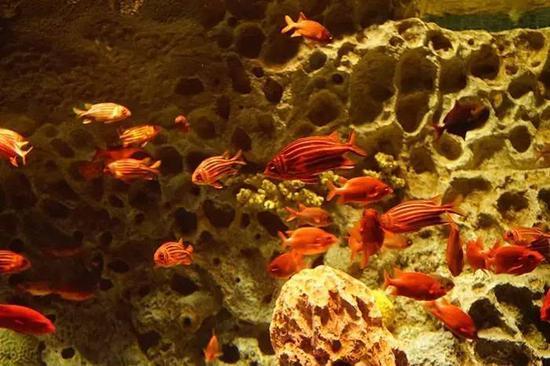 亮闪闪会发光的鱼,好漂亮,仅仅看看就觉得是一种享受