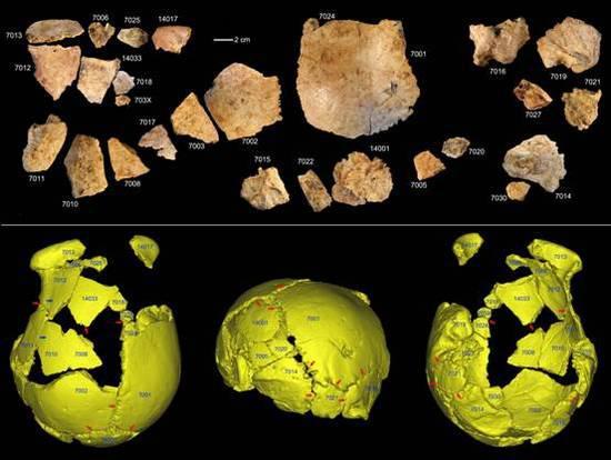 许昌1号头骨化石碎片及头骨化石的3D虚拟复原(吴秀杰供图)