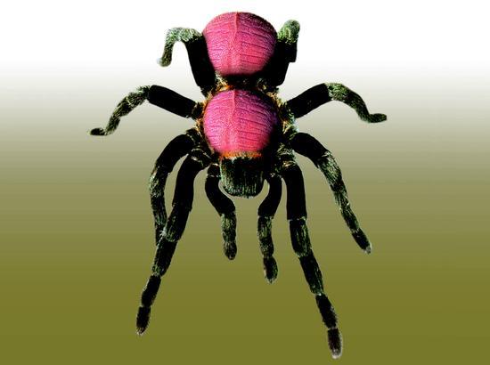 昆虫名称1:重组,尺寸:80X60cm创作年代:1996年-李山 当生命本
