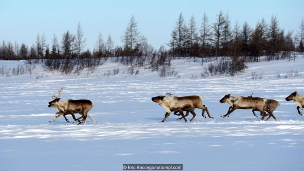 西伯利亚的生态环境在数千年间经历了很大变化。