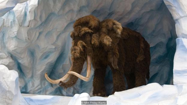 猛犸象已灭绝了数千年。